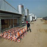 Grange préfabriquée de volaille avec le matériel d'aviculture d'ensemble complet