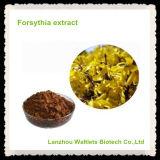 Extracto natural del Forsythia de la alta calidad