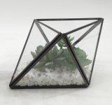 최신 판매 화분에 심는 Succulent가 인공적인 콘 Terrarium에 의하여 설치한다