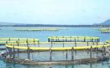 Circular de la acuacultura que cultiva jaulas de la pesca del arco iris