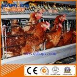 Ferme de poulet avec la cloche automatique de matériel et de contrôle