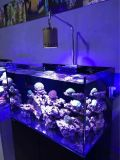 Vente en gros Epistar Dimmable Aquarium LED pour Coral Reef