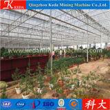 Serre chaude de tunnel de Multispan pour la fraise, raisin, Chambres vertes agricoles
