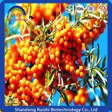 Poudre organique de fruit de Seabuckthorn
