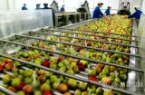 Chaîne de production automatique de jus de fruits