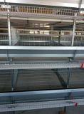 Fabricación de jaula de la capa del pollo con el sistema automático