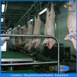 Riga high-technology del mattatoio del maiale
