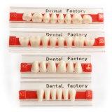 SA31 tre denti della resina acrilica di strato