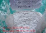 Testostérone Propionate Steroids Powder pour Muscle Building