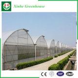 Serra di plastica di agricoltura per l'ortaggio/fiore