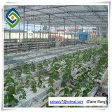 Estufa de vidro vegetal ao ar livre do frame de aço com sistemas hidropónicos