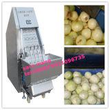 Machine d'épluchage automatique d'oignon avec des extrémités coupant la fonction