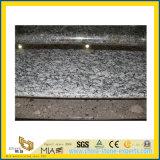Spruzzo Polished White Granite Countertop per Kitchen/Bathroom