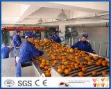 de lijn van de citroensapverwerking