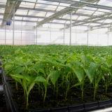 Bandeja plástica nova do berçário de /PS da bandeja do Seedling/bandeja da semente