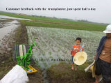 2 صفح يدويّة أرزّ [ترنسبلنتر]