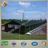 중국 공급자 빛 강철 구조물 가금은 유숙한다