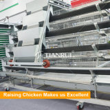 Оборудование цыплятины рамки горячее окунутое гальванизированное для слоев