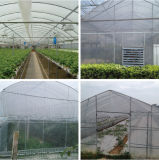 200 микронов Plastic Film Green House Plastic Film Made в Китае