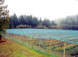 HDPE 녹색 농업을%s 반대로 우박 그물