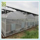 Casa verde da multi morango da estufa da extensão