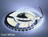 옥수수 속 유연한 LED 지구