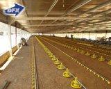 Dirigir de la avicultura del diseño de la estructura de acero de la luz de la fábrica