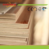 Madera contrachapada marina de Okoume de la madera contrachapada con precio competitivo