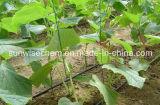 Canalisation 1600 d'égouttement d'irrigation/boyau d'égouttement