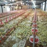 As aves domésticas automáticas abrigam o equipamento para a produção da grelha