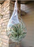 涙のガラス陸生動物飼育器はRopeかハングの水気が多い庭プランターの空気プラントホールダーによって保持した
