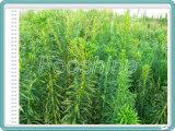 [ويد كنترول] 5% [مستريون]+[20ترزين] [إك] مبيد للأعشاب