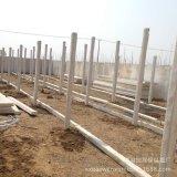 Casas locales grandes de la granja de pollo del plan en África