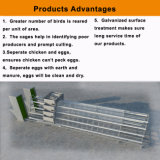 Клетка цыпленка слоя большой емкости Fram цыплятины с ISO9001
