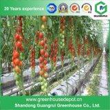 Hydroponic 성장하고 있는 시스템을%s 좋은 품질 유리제 온실