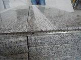 G623 Gris Granite Plancher / Carreaux (XJL-G623)