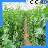 Système hydroponique spécial pour cultiver des légumes et des fruits