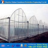 Изготовление специализировало в пластичном парнике свода от большого парника в Китае