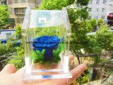 Kunstbloem van de Dag van moeders de Natuurlijke Bewaarde Voor Giften die in de Verpakking van Groene Verse Bewaarde Anjer worden gediversifiërd