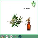 Olio puro naturale dell'albero del tè di 100%, olio essenziale
