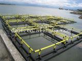 Circulaire d'aquiculture cultivant des cages de pêche d'arc-en-ciel