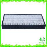 상단은 LED 실내 성장하고 있는 램프를 증가한다 가벼운 플랜트를 증가한다