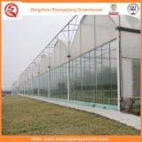 野菜または花のためのプラスチック温室の耕作