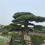 Пальма украшения ландшафта искусственная