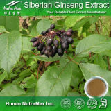 100% Ginseng sibérien naturel Extract (Eleutheroside (b+e) 0.8%)