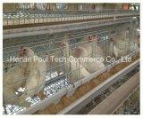 Huhn-Bauernhof-heiße verkaufenschicht sperrt Gerät ein (einen Typen)