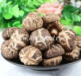 Cogumelo saudável natural da flor do chá dos vegetais secados