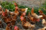 닭 양육을%s 6각형 철사 그물세공