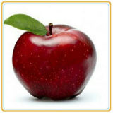 Le rendement élevé, best-seller a mis en boîte des pommes