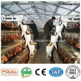 Matériels alimentants d'usine de cage de poulet de ferme avicole et potables automatiques